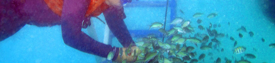 Fish Feeding at Puerto Galera